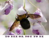 Bee or not be