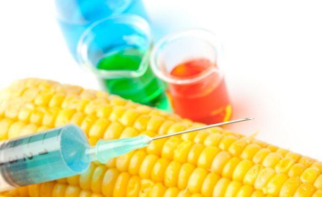 Cultivos gen ticamente modificados son falsos milagros for Que son cultivos asociados