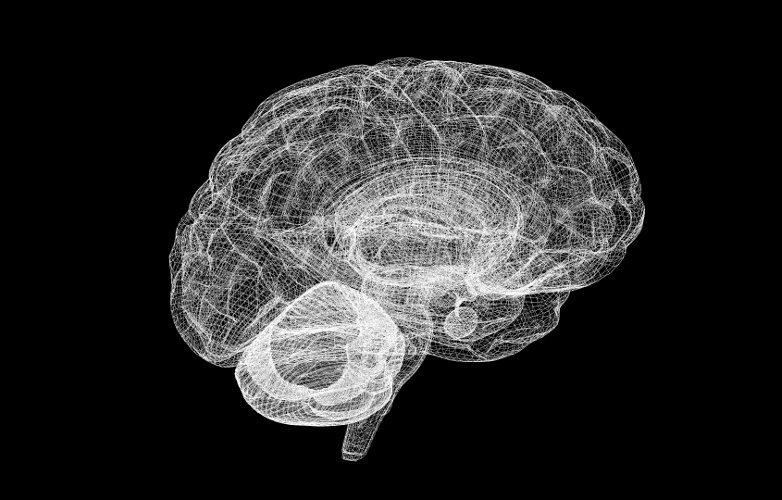 Vibraciones cuánticas neuronales respaldan teoría