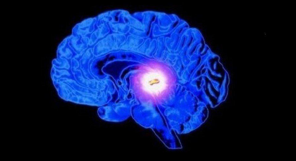 Glándula pituitaria (hipófisis): el nexo entre neuronas y hormonas ...