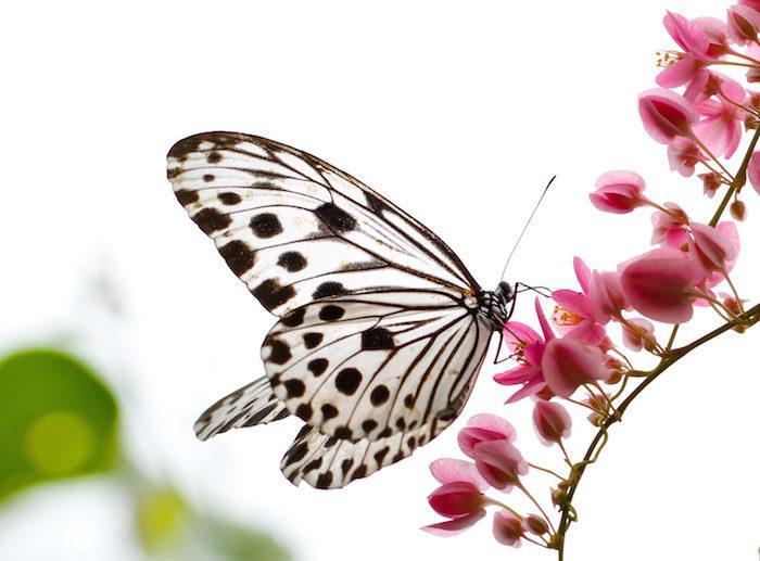 La noche oscura del alma la metamorfosis de la oruga a mariposa la ciencia del esp ritu - Salva escritorio ...