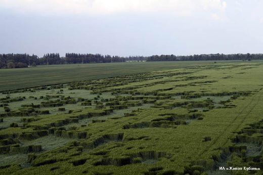 Círculos cosechas - crop circles  Crop_russia_13184