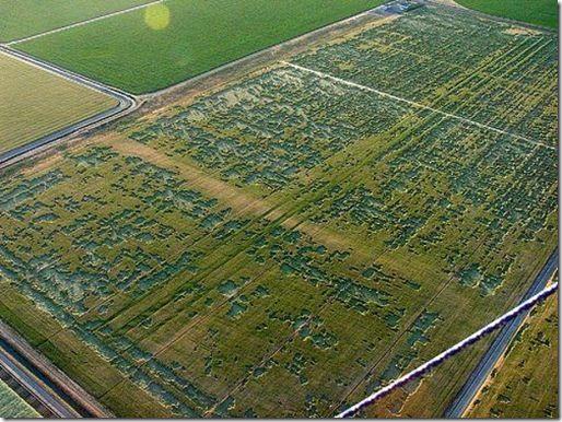 Círculos cosechas - crop circles  Croprusia_thumb