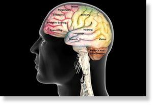 Actividad eléctrica del cerebro