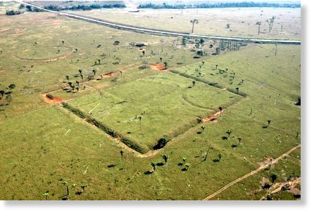 geoglifos en Amazonia 4