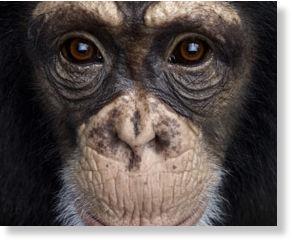 El examen del espejo: 9 animales que son conscientes de sí mismos Conscientes_de_s_mismos1