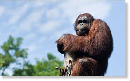 El examen del espejo: 9 animales que son conscientes de sí mismos Conscientes_de_s_mismos3
