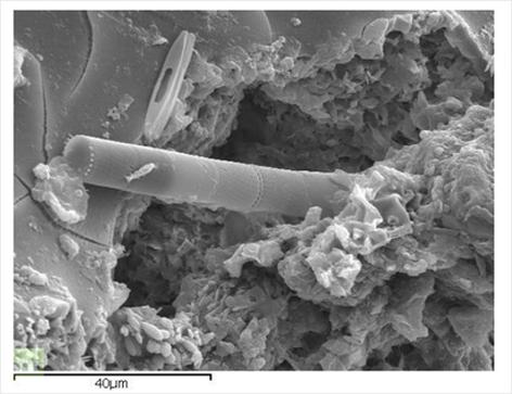algas en meteorito2