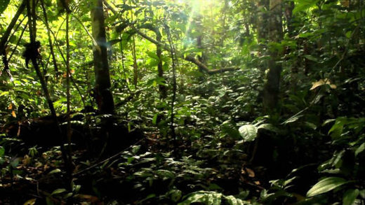 Amazon forrest bosque