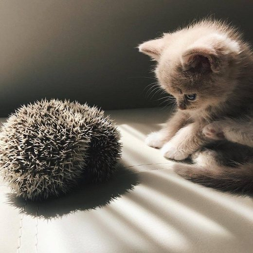 Pikabu meets hedgehog