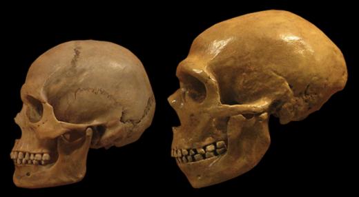 Human y neandertal