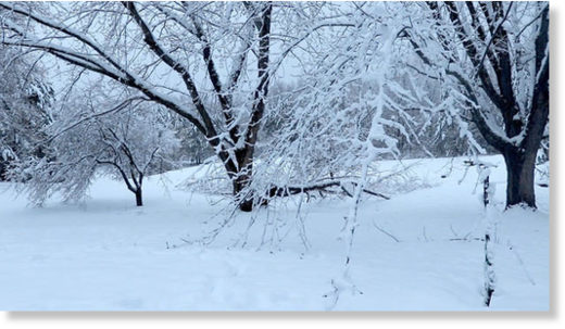 Heavy, wet snow weighs down tree branches in Cloquet Thursday morning.