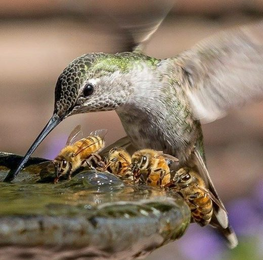 Humming bird and bees