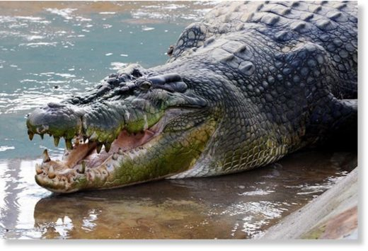 It is the fifth such crocodile incident in the Filipino town of Balabac this year
