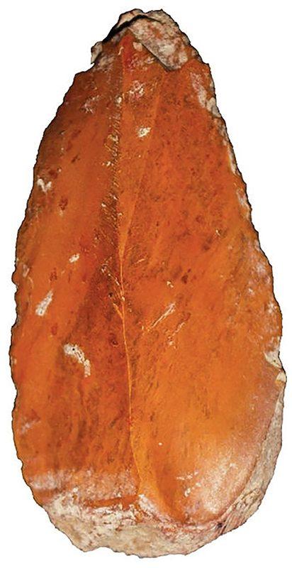 flecha de piedra