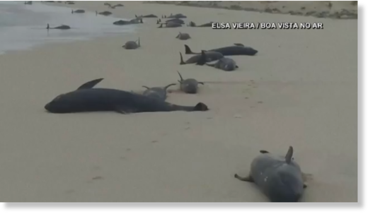 134 dead whales emerge in a mass stranding in Cape Verde