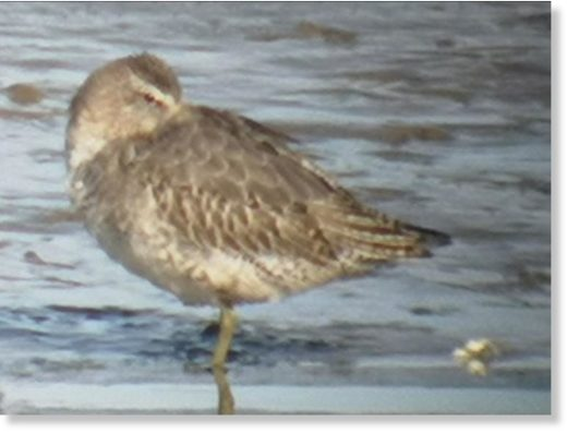 Rare bird swept to Dundalk from US by hurricane, says local bird expert