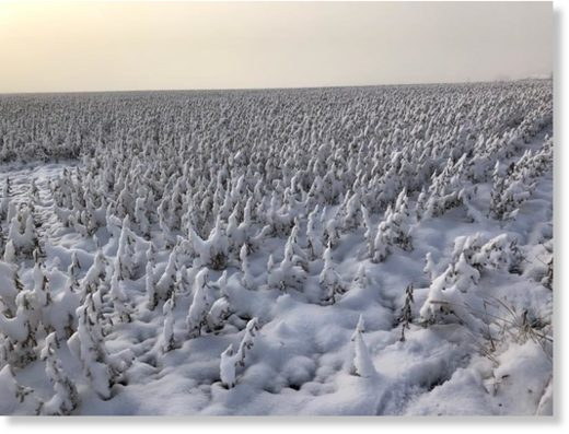 A soybean field near Anamosa is covered in snow Tuesday morning