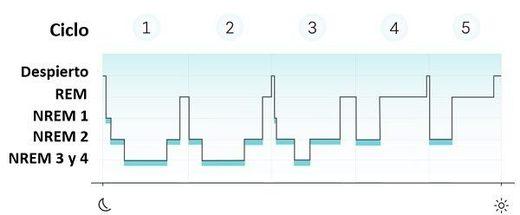 ciclo de sueño