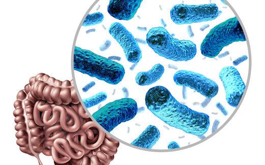 gut microbiome