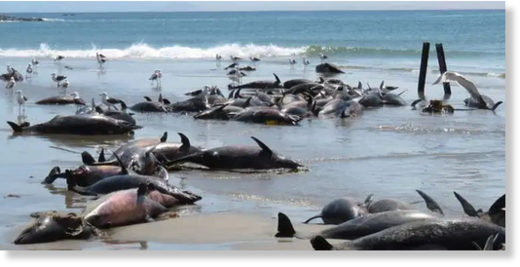 Probe launched after 86 dolphins die on beach