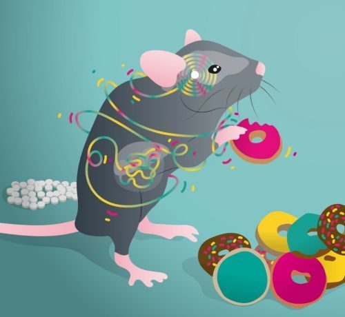 Mouse food donuts