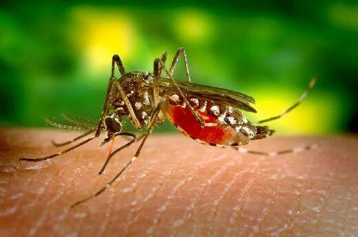 Estudio identifican una nueva cepa del Zika y podría causar otra epidemia en Iberoamérica