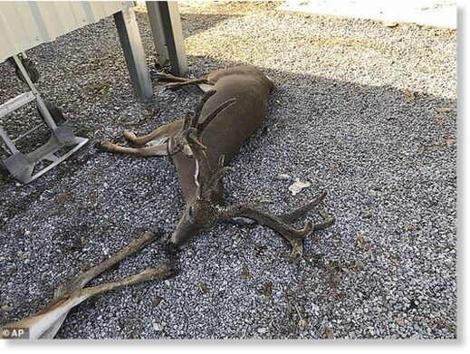 A deer rancher lost about 30 of his 110 animals