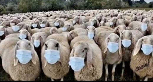 sheep with masks