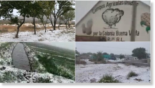 Inhabitants of the municipalities of Janos and Ascensión , in the northwest of the state of Chihuahua , shared images of the snowfall this morning on October 27