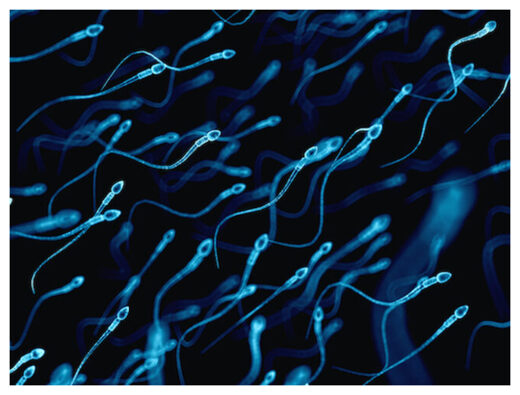 Sperm Remember