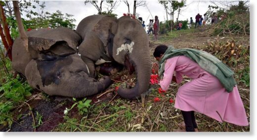 Elephants died after being struck by lightening near Bamuni Hills in Kandali, Nagaon district, in Assam on Wednesday night.