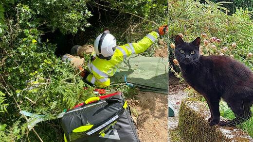 cat saves master