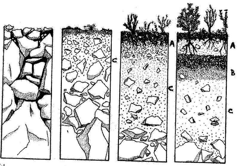 La formaci n del suelo el agua la agricultura y el for Materiales que forman el suelo