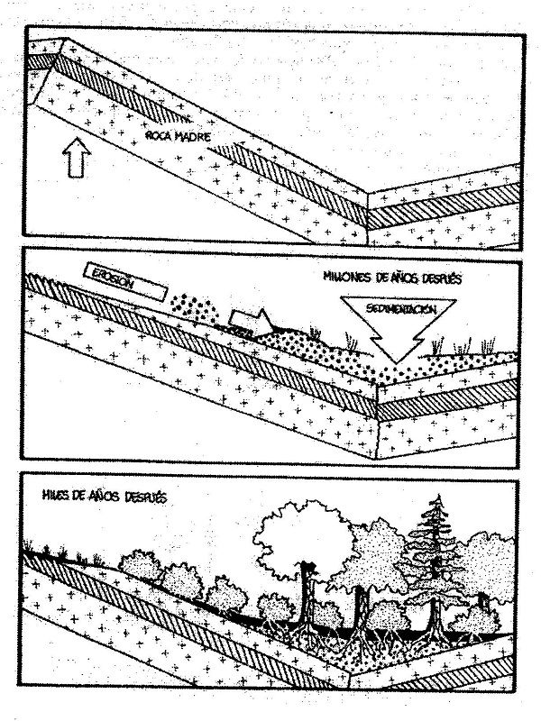 La formaci n del suelo el agua la agricultura y el for Suelo organico para dibujar