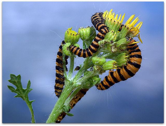 Espionaje en el subusuelo insectos graban mensajes en las - Plantas para ahuyentar insectos ...