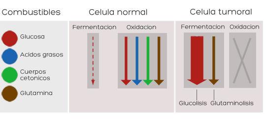Dieta cetogenica x cancer